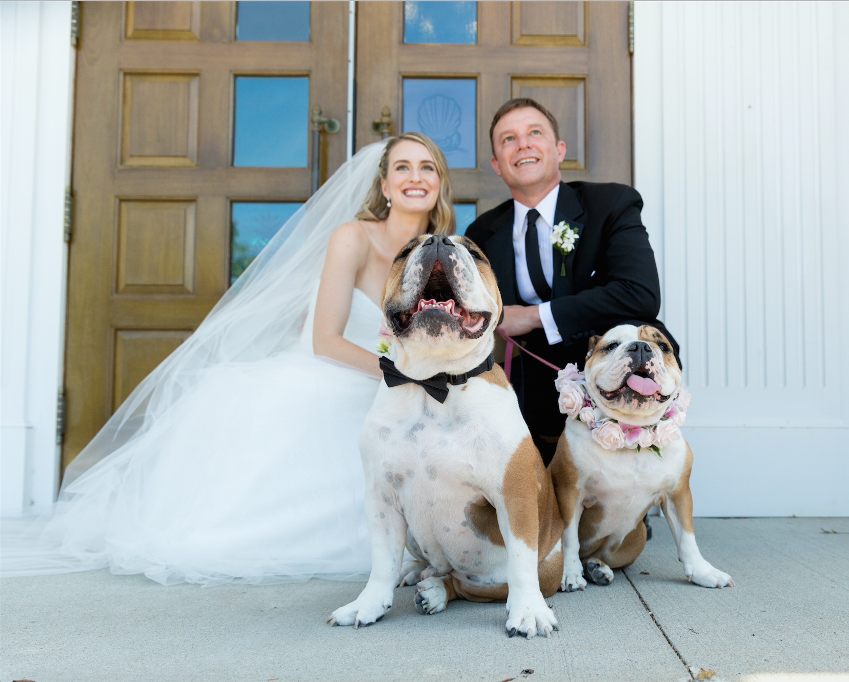 Bride and Groom with English Bulldogs